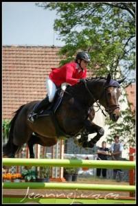 horse_cikda-big.jpg